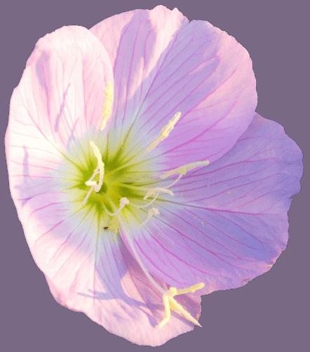 Herbs 11 - Ellia Natural Cosmetics - Cyprus Europe