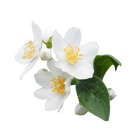 Herbs 32 - Ellia Natural Cosmetics - Cyprus Europe