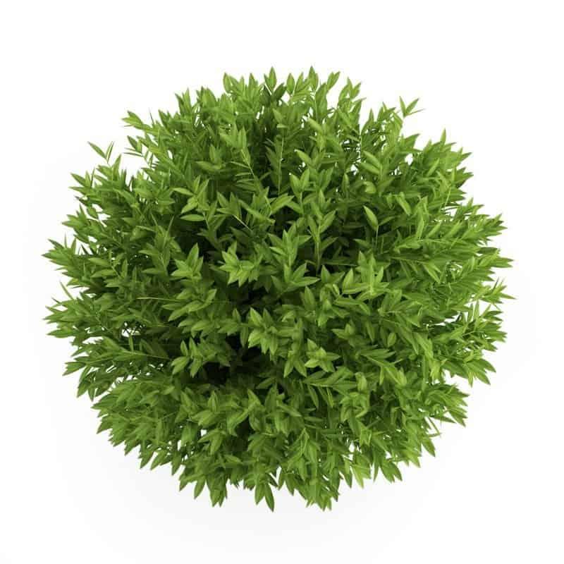 Herbs 36 - Ellia Natural Cosmetics - Cyprus Europe
