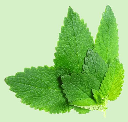 Herbs 31 - Ellia Natural Cosmetics - Cyprus Europe