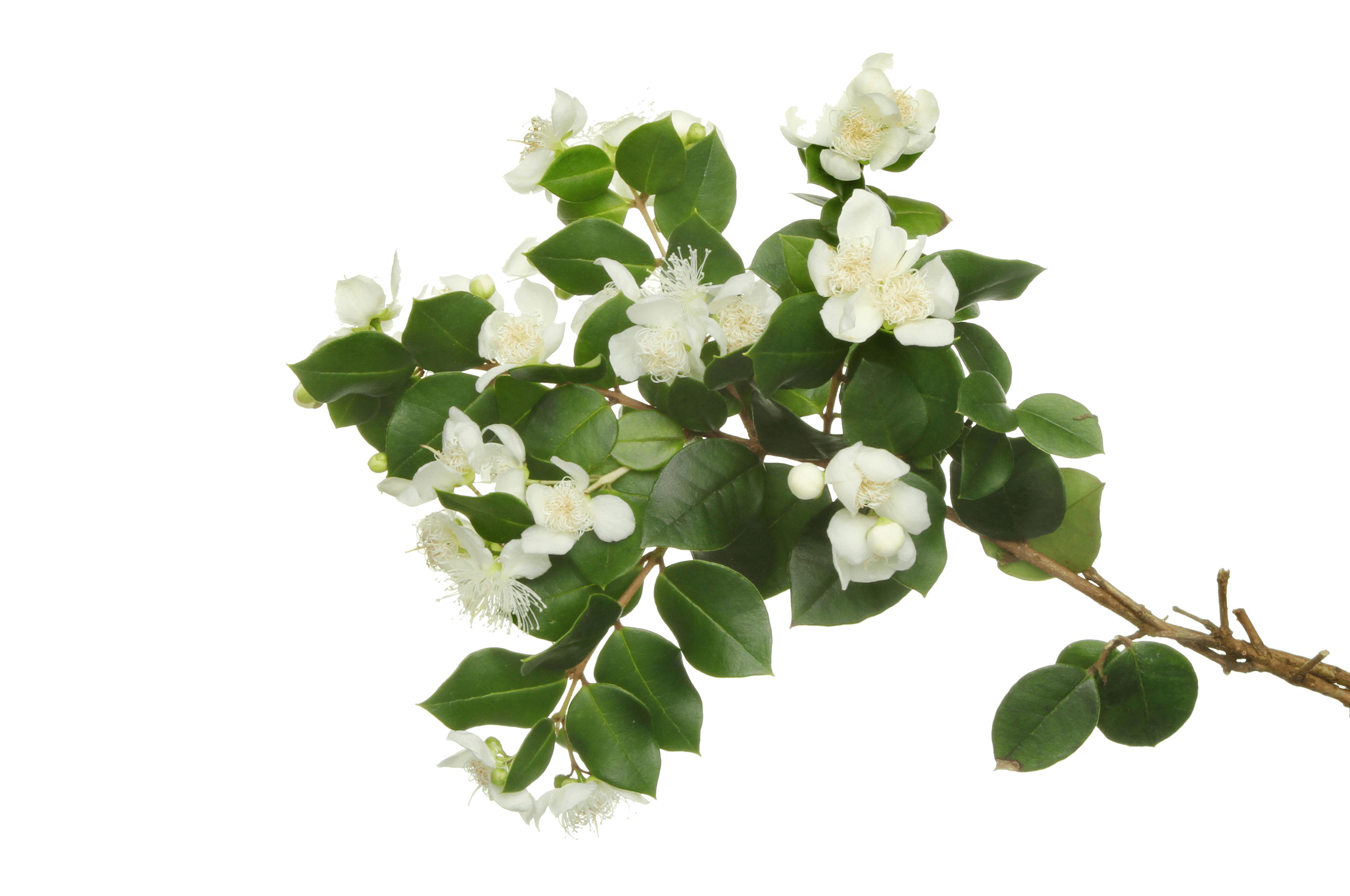 Herbs 17 - Ellia Natural Cosmetics - Cyprus Europe