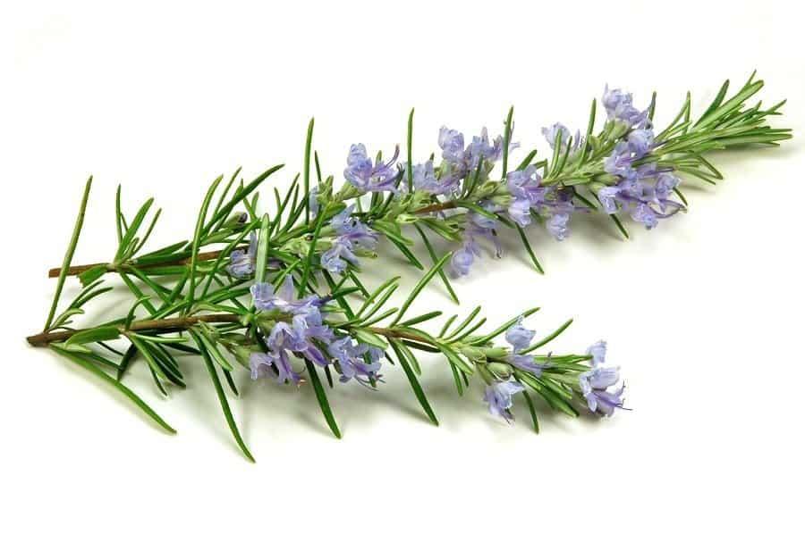 Herbs 2 - Ellia Natural Cosmetics - Cyprus Europe