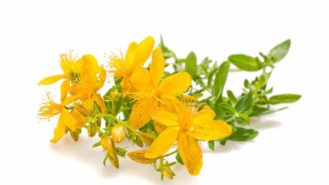 Herbs 19 - Ellia Natural Cosmetics - Cyprus Europe