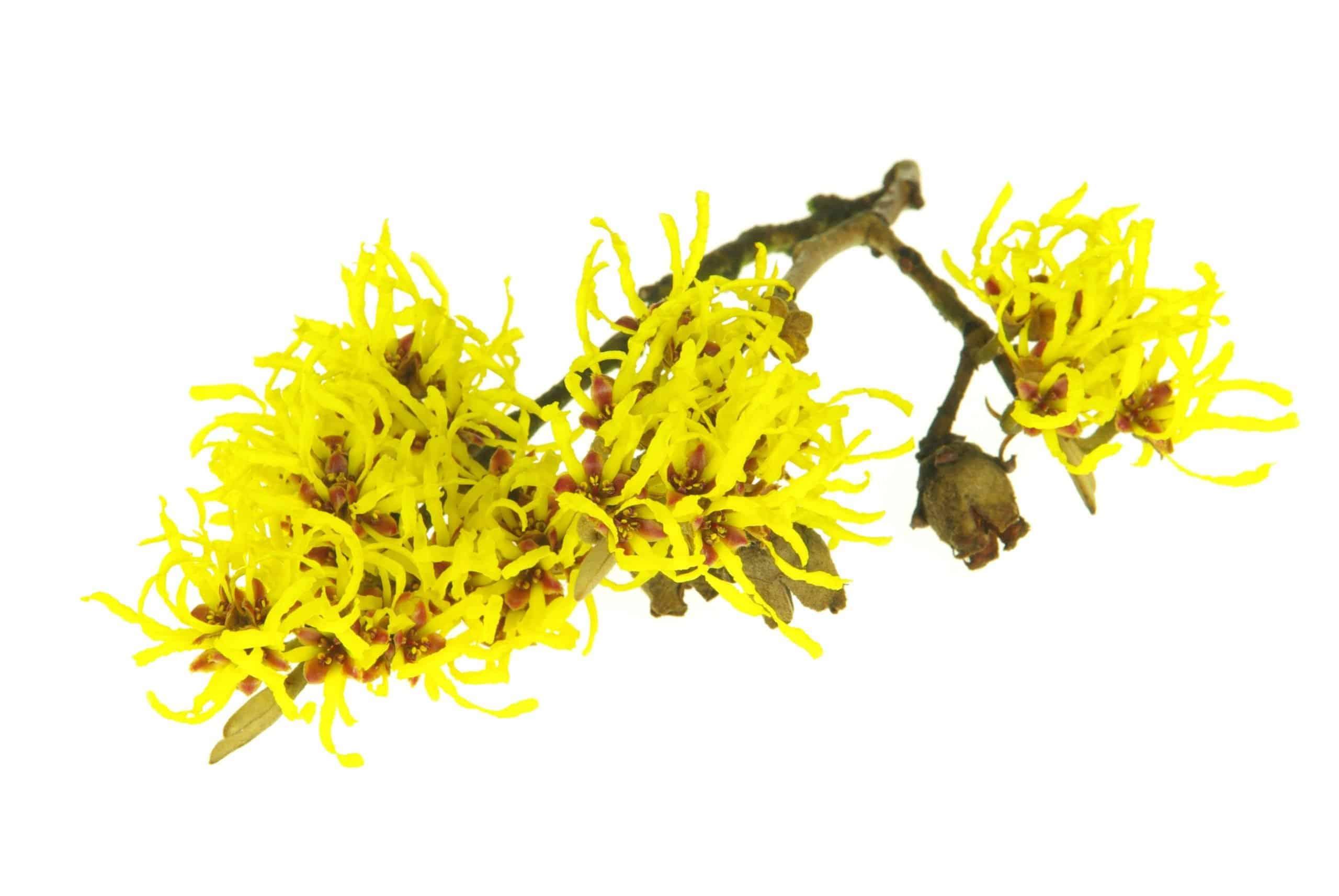 Herbs 33 - Ellia Natural Cosmetics - Cyprus Europe