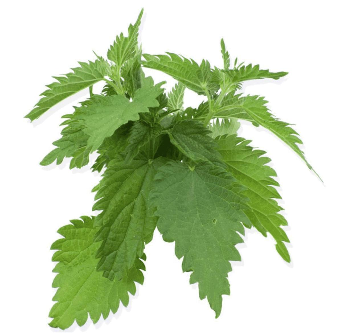 Herbs 39 - Ellia Natural Cosmetics - Cyprus Europe